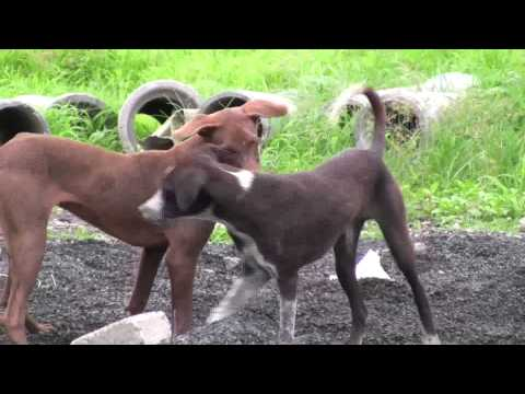Xxx Mp4 Attack Sex Natural Internal Inspiration In Young Dogs 3gp Sex