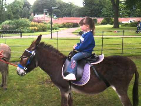 Megan Wellman on stubborn donkey