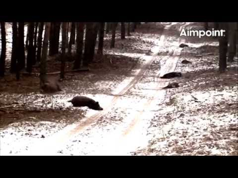 Aimpoint Trailer Wild Boar Fever 4