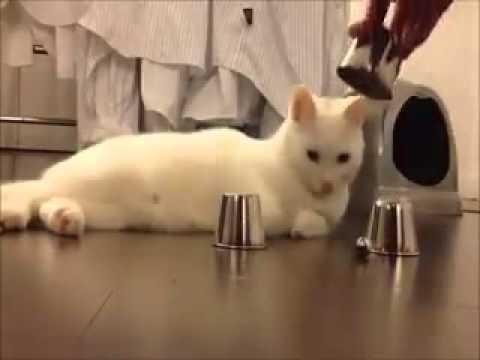 Smart cat xxxxx