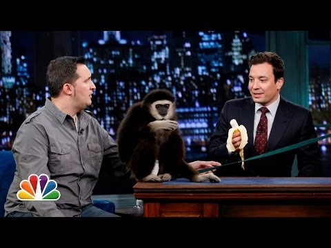 Jeff Musial Otters Gibbon and Water Buffalo Part 1 Late Night with Jimmy Fallon