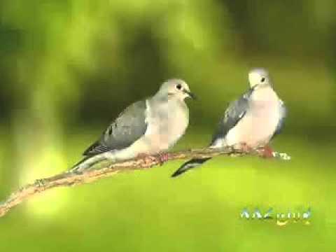 Parindy Bhe Zekar karty Hain Molana Tariq Jameel