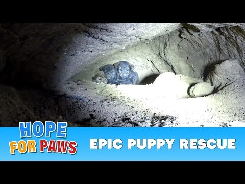 Xxx Mp4 Epic Puppy Rescue 18 Feet Into The Earth Dangerous Hope For Paws Rescue 3gp Sex