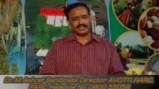 FMD/ Foot & Mouth Disease/Mun khur desi elaj Dr.Ashraf Sahibzada