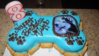 Mishka the Talking Husky's Dog Birthday Party!!!!!