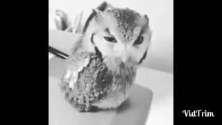 VIDEOS ENGRAÇADOS WHATSAPP Hoje é Sexta feira com coruja