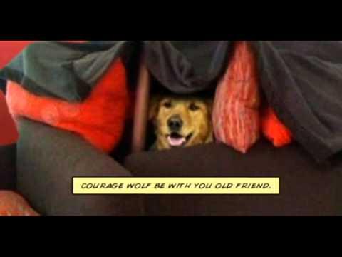 DogFort, Episode IV 'A New DogFort'
