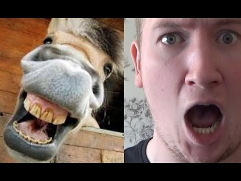 Xxx Mp4 Horse Bums Man To Death On The Internet 3gp Sex