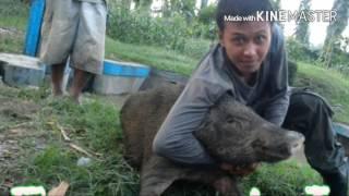 Berburu Babi Hutan Tradisional Dusun Mingkrik , Jawa Tengah