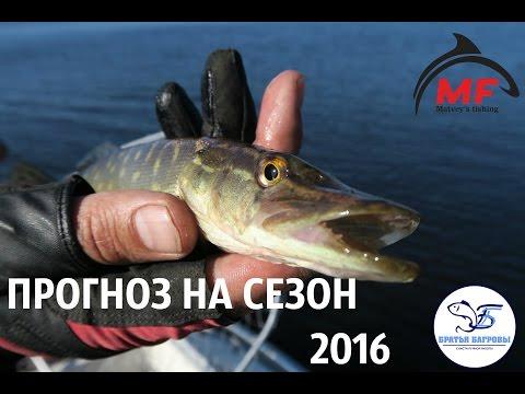 прогноз клева рыбы на рыбинском