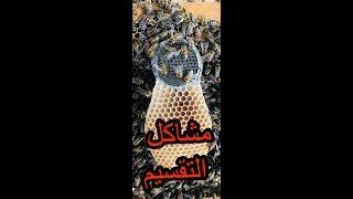 شاهد  تقسيم صندوق  النحل  طرد جديد ونصيحه مهمه اخر الفيديوه  /24/6/2018