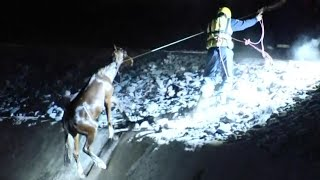 Arizona Firefighters Use Cowboy Skills to Save 2 Horses From Drowning