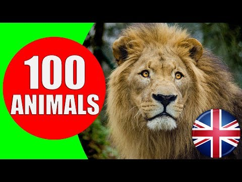 Animals for Kids to Learn 100 Animals for Kids Toddlers and Babies in English Educational Video