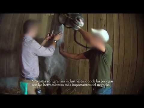 Carreras de caballo al descubierto fármacos y muerte