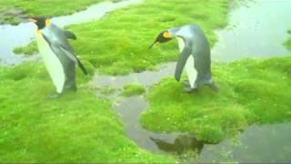 The Penguin Dilemma - Translation