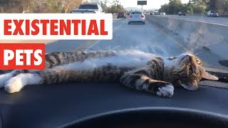 Existential Pets | Funny Pet Video Compilation 2017