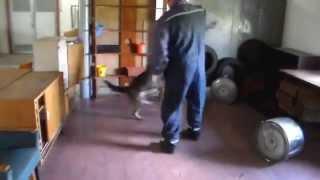 Dog Training - May  / Slovakian K9