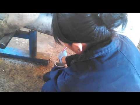 Xanti colectando semen de suino en Jilotepec