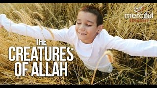 The Creatures of Allah (Killing Animals and Trees)