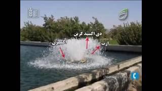 پرورش ماهی قزل آلا - رسانه سبز www.ResaneSabz.ir