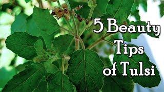 5 Holy Basil Benefits for Beauty by Sonia Goyal @ ekunji.com