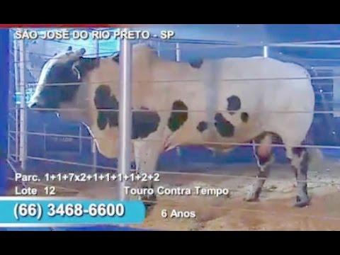 1º Leilão Estrelas das Arenas 2015 ● Touros de Rodeio Cia André de Mogi