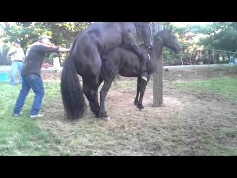 Horse breeding Caballos