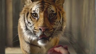 Life of Pi Movie Clip # 3 Meet the Tiger