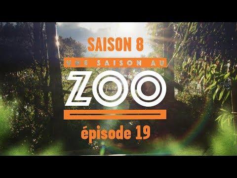 Xxx Mp4 Une Saison Au Zoo S8 Ep 19 3gp Sex