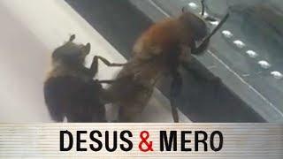 Bee Getting in that Honeypot