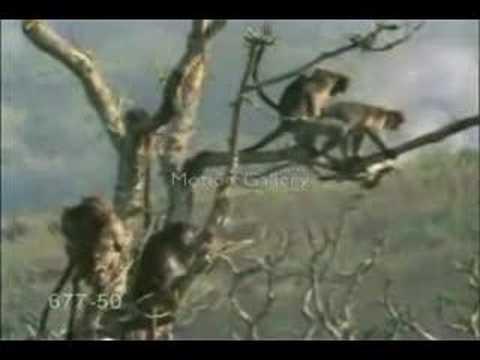 Xxx Mp4 Funny Monkey Sex 3gp Sex