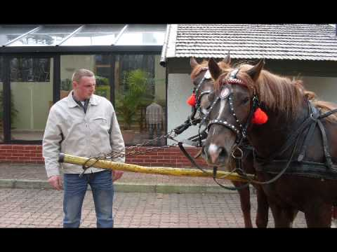 Moje konie