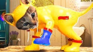 Lindo Gatito Aventuras - Dibujos Animados Infantiles | Cuidado divertido de animales de compañía