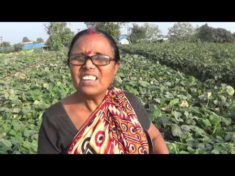 Biswa Bangla (Where The World Meets Bengal) To Gram Bangla (Village Bengal) A Beautiful Coexistence