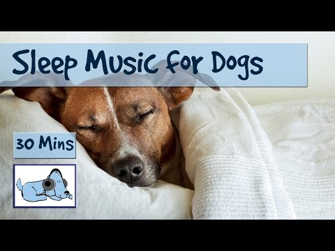 Relaxation Sleep Music for Dogs and Puppies! 30 Minutes of Calming Dog Music