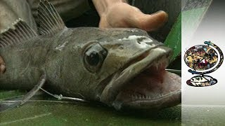 The Plight of the Patagonian Toothfish (2000)
