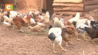 Kenya bans Uganda poultry products