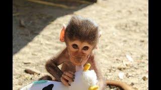 Cute Monkeys Part #52 - Baby Baboon Monkey Eating Banana & Cake...Really Delicious or Unappetizing?