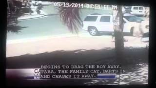 Cat turn hero by saving boy from dog attacked