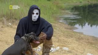 Les combats de chiens aux Etats Unis