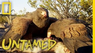 Why Eagles, Falcons and Hawks Are Top Predators: Ep. 3   Untamed with Filipe DeAndrade