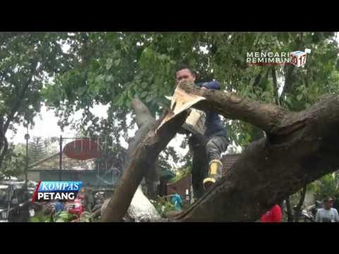 Pohon Tumbang, 5 Mobil dan Belasan Motor Rusak