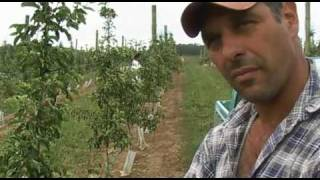 Apple Farming in Australia