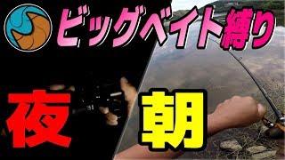バス釣り/夏のビッグベイト縛り/ネコソギXXX/香川 内場ダム&野池
