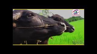 সোনা বন্দে আমারে | কন্যার দিলে বড় জ্বালা | Poly | Bangla hot song