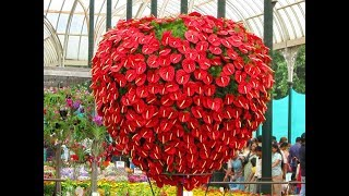 Top 12 Most Beautiful Flowers in The World