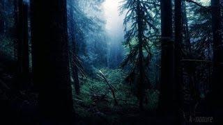 FORÊT LA NUIT - Grillons Pluie Hiboux Vent Dans les Branches - Etude Sommeil Détente 🎧 100% RELAX