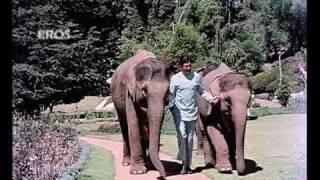 Dhak Dhak Kaise Chalti Hai (Video Song) - Haathi mere saathi