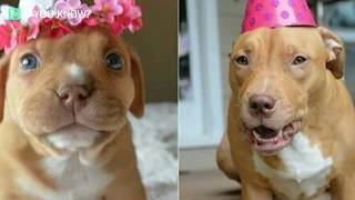 Penny The Miracle Pup Celebrates A Birthday No One Thought She Would Live To See