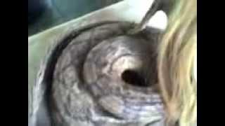 Half human half snake creature caught in the Congo river
